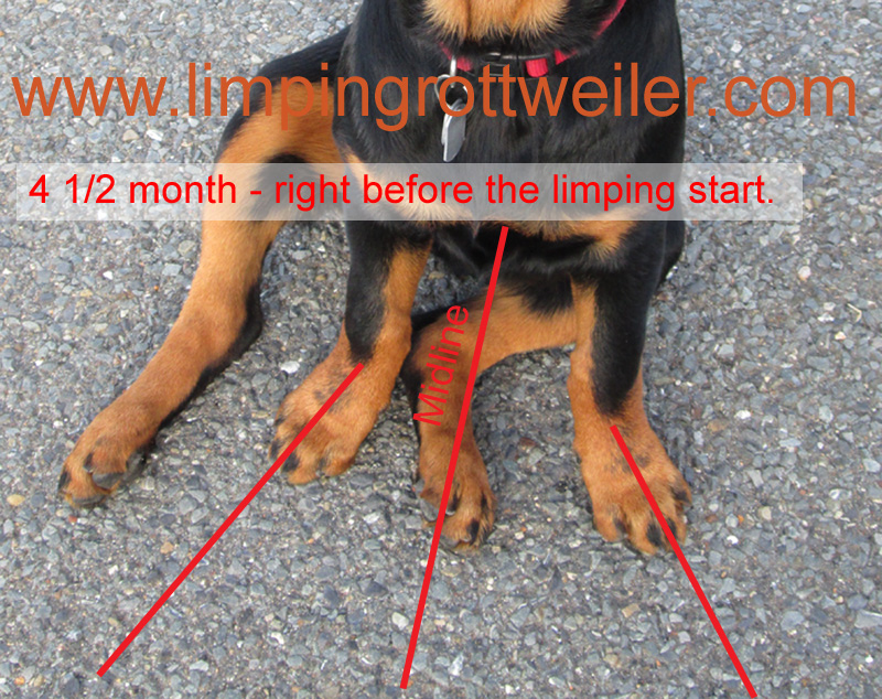 Pictures of Rottweiler puppy with Elbow Dysplasia taken from